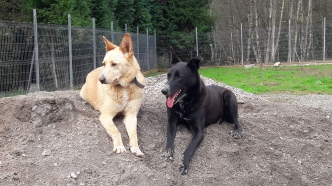 Monty y Travi